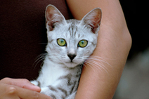 Becoming a Cat Parent | cats & dogs! | Scoop.it