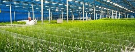 Primera planta de geotermia para alimentar invernaderos | Infraestructura Sostenible | Scoop.it