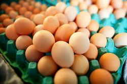 """Le """"guichet unique"""" pour les producteurs d'oeufs en difficulté calme ...   La filière avicole   Scoop.it"""
