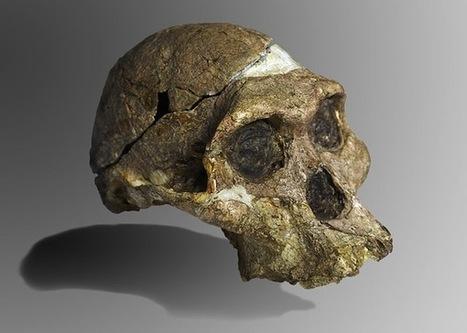 Ancient Human Ancestors Heard Differently - Scientific American | Aux origines | Scoop.it