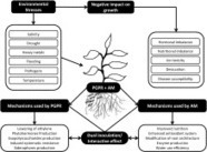 The role of mycorrhizae and plant growth promoting rhizobacteria (PGPR) in improving crop productivity under stressful environments | RACC | Scoop.it