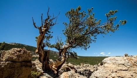 Leaf bacteria fertilize trees, researchers claim   GMOs & FOOD, WATER & SOIL MATTERS   Scoop.it
