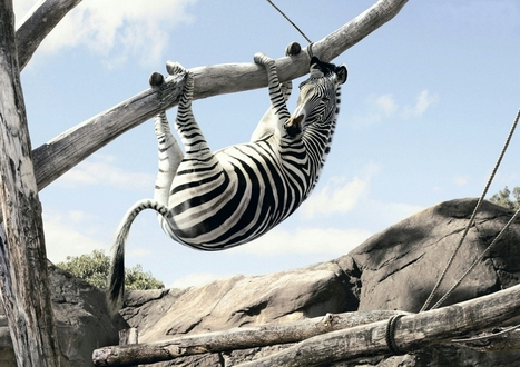 Une conférence tant attendue sur les grands zèbres (ou adultes à haut potentiel) | Bienvenue dans la Sandy-sphère ! | Veille sur les EIP | Scoop.it