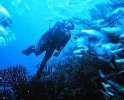 SCUBA SCOOP/latest dive stories: The Beauty of the Dive | All about water, the oceans, environmental issues | Scoop.it