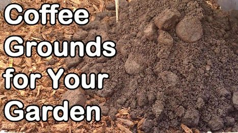 Coffee Grounds: How And Why We Use Them In Our GardenOurGardenClub | OurGardenClub | Gardening | Scoop.it