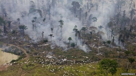 Brazil pursues Amazon 'destroyers' | Sustain Our Earth | Scoop.it