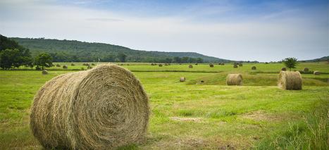 Arkansas Wineries AR | Business | Scoop.it
