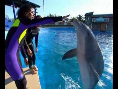 Géographie » les dauphins | Nature en vie | Scoop.it