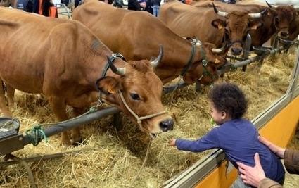 L'Aveyron à l'honneur au Salon de l'agriculture | L'info tourisme en Aveyron | Scoop.it