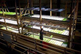 Perch Find New Life in an Old Milwaukee Factory - Aquaponics | Cultivos Hidropónicos | Scoop.it