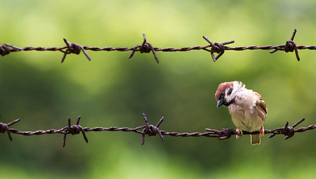The Great Sparrow Campaign was the start of the greatest mass starvation in history | Sustainability | Scoop.it