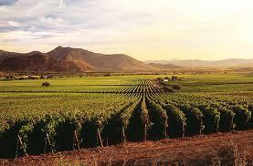 Climate change sends Chile's #wine industry southward | Vitabella Wine Daily Gossip | Scoop.it