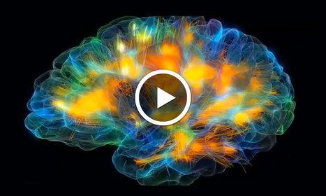 Cette impressionnante modélisation 3D vous dévoile l'activité de notre cerveau comme jamais | veille  Ingénierie pédagogique e-learning | Scoop.it