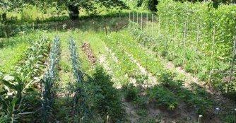 Jardins partagés - ladepeche.fr | Jardins partagés de là-bas et au-delà - Community gardens from the world | Scoop.it