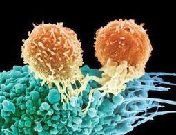 Antibody wakes up T-cells to make cancer vanish | Biosciencia News | Scoop.it