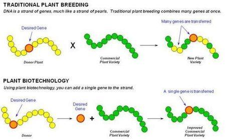 PICSE   Year 10 Biology - Genetics   Scoop.it