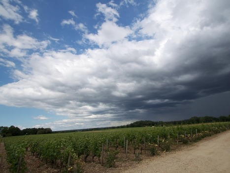 Keeping an eye on weather arond the globe | World Wine Web | Scoop.it