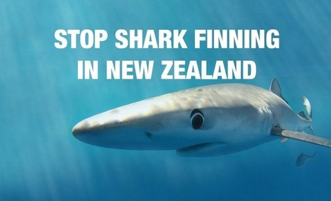 Help put an end to #sharkfinning in New Zealand waters. | Via @VidarOceans Protecting the Oceans | Scoop.it