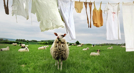 How Great Entrepreneurs Lure Their Competitors' Sheep Away | MarketingHits | Scoop.it