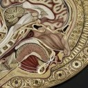 New Quilled Paper Anatomy by Lisa Nilsson | Colossal | SciArt | Scoop.it