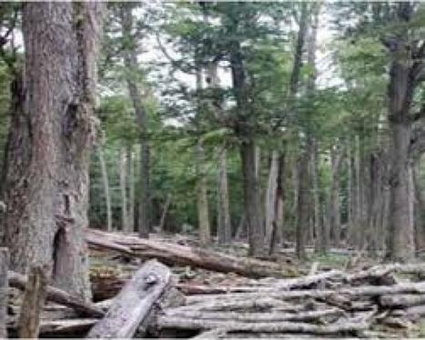 Impulsan proyecto para generar energía con residuos foresto-industriales en Tolhuin | LA MISION | Scoop.it
