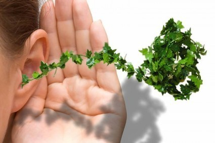 Sons et jardins | DESARTSONNANTS - CRÉATION SONORE ET ENVIRONNEMENT - ENVIRONMENTAL SOUND ART - PAYSAGES ET ECOLOGIE SONORE | Scoop.it