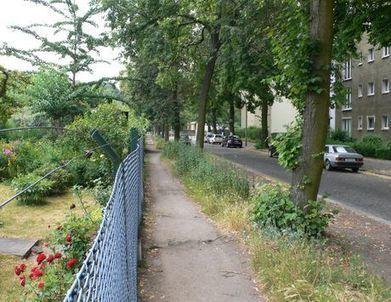 Place à la biodiversité urbaine! | Paysage et espaces verts | Scoop.it