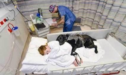 Et pourquoi pas des animaux dans les hôpitaux ?