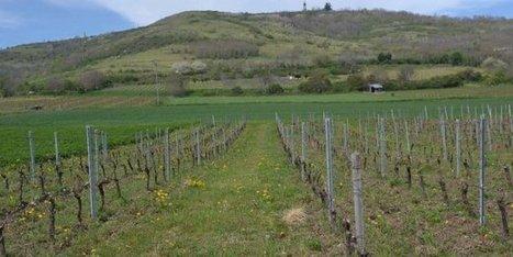 Vins : quand Auvergne et Rhône-Alpes font cause commune | Verres de Contact | Scoop.it