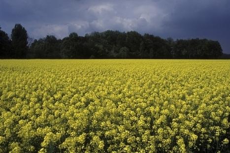 INRA - Effets du changement climatique sur le territoire agricole français | Ressources pédagogiques AIGEME | Scoop.it