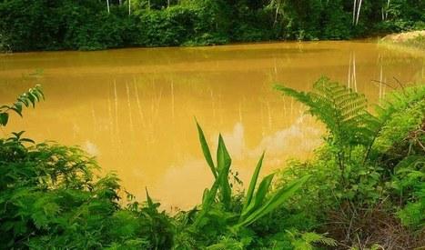 Actualités 2011-2015 - Association Maiouri Nature Guyane   Guyane : alertes mine d'or Nationale   Scoop.it
