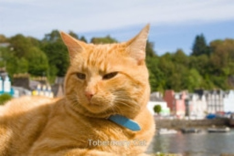 Artist accuses writer of stealing cat story idea from Facebook - Scotland - Scotsman.com | Culture Scotland | Scoop.it