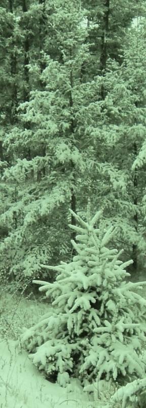 "Poem: ""Christmas Trees"" by Robert Frost | Christmas Readings | Scoop.it"