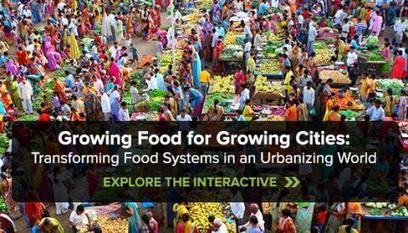 Growing Food for Growing Cities: Transforming Food Systems in an Urbanizing World | Chicago Council on Global Affairs | (Culture)s (Urbaine)s | Scoop.it