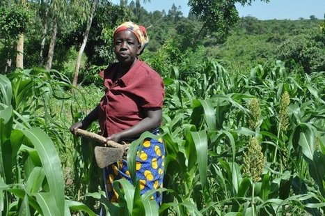 Tackling climate change: Kenya holds first national adaptation ... | Ecosystem and community-based climate adaptation | Scoop.it