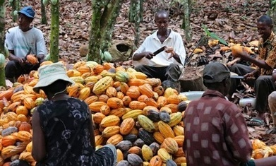 Gates foundation spends bulk of agriculture grants in rich countries | Food & Nutrition Security in East Africa | Scoop.it
