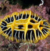 Reef Facts - Plants and Animals | Ecosystems | Scoop.it