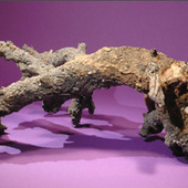 How we know that this is a piece of fossilized lightning | Science is Cool! | Scoop.it