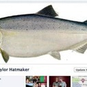 New Facebook Timeline feature now available worldwide | Dolphins | Scoop.it