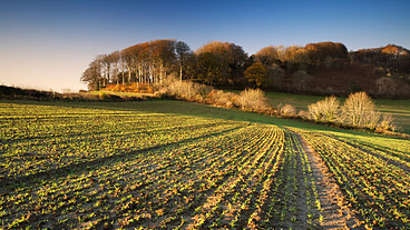 Farming Today 14/01/2013: interview Simon Blackmore | BBC Radio 4 | Cultibotics | Scoop.it
