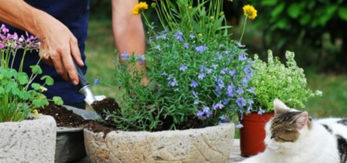 5 green-fingered iPhone apps to make your garden grow | Garden apps for mobile devices | Scoop.it