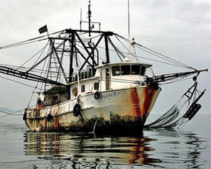 FIS - Worldnews - Huge investment to fight illegal fishing | Commercial fishing - legal issues | Scoop.it