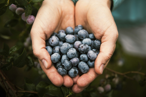 The feel-good factor of fruit and vegetables - Juice Daily | Curious | Scoop.it