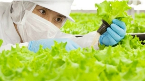 World's first 'Robot Run' Farm to open in Japan | Technology in Business Today | Scoop.it