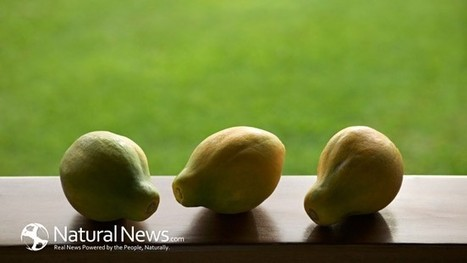 Warning: 12 American Foods That Are Banned In Other Countries - Natural News Blogs | Innovative Marketing and Crowdfunding | Scoop.it