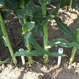 Sensores de humedad en la agricultura | iRiego | Scoop.it