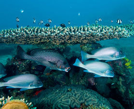 Earth's Prized Corals Discovered | Scuba Diving Adventures | Scoop.it