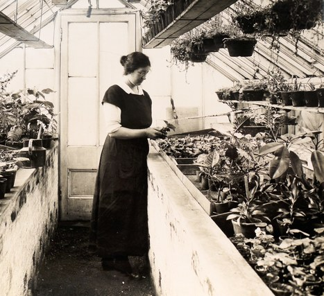 Botany, 100 years ago | Plant Biology Teaching Resources (Higher Education) | Scoop.it