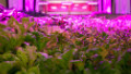 'Vertical farm' blossoms at meatpacking plant - CNN.com | Vertical Farm - Food Factory | Scoop.it