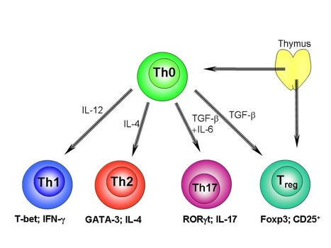 Regulatory T cell proliferative potential is impaired in human autoimmune disease | A New Society, a new education! | Scoop.it